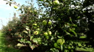 Two different kind of apples video