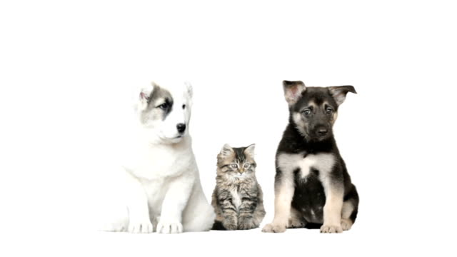 two dogs and a cat on a white background video