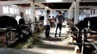 Two Farmers Having Conversation in a Barn video