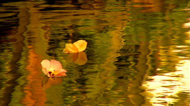 Two flowers floating down river in Tahiti video