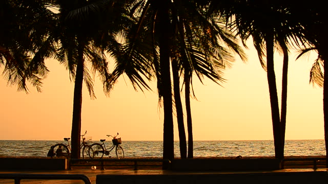Two Girls Relaxing at Sunset Palm Tree Beach with Bicycles video