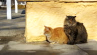 Two Gray and Red Homeless Cats on the Street in Early Spring video