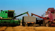 Two Harvesters are Unloading Grain to the Truck video