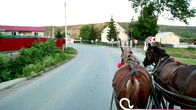 Two horses in a cart with the eyes of a groom video