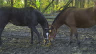HD: Two horses nuzzling video