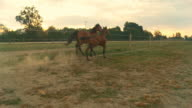 HD SLOW MOTION: Two Horses Running At Dawn video