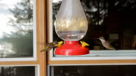 Two hummingbirds. video
