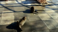Two large stray cat sitting in the winter video