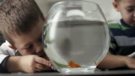 Two little boys with goldfish video