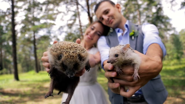 Two little happy hedgehogs in hands of bride and groom video