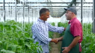4K Two men in handshake in greenhouse video