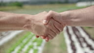 Two men shaking hands at the lettuce field video