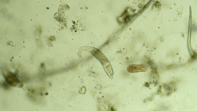 Two micro organisms - zoom in video