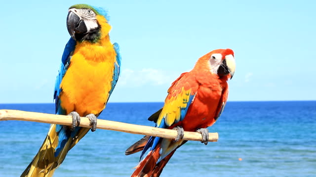 Two parrots on the beach video