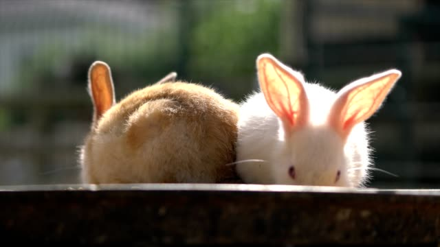Two rabbits video