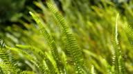 Two videos of fern in 4K video