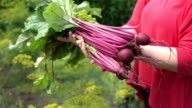 Two videos of hands holding beetroots in real 1080p slow motion 250fps video