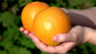 Two videos of hands holding oranges in real slow motion video
