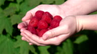 Two videos of hands holding raspberries in real slow motion video