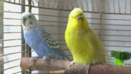 Two videos of parrots in 4K video