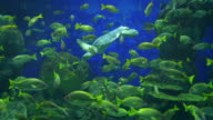 Two videos of reef in 4K video