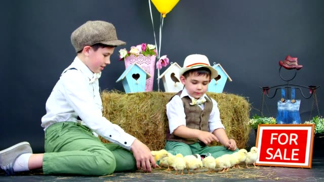 Two village, stylishly dressed boys play with ducklings and chickens, in the background a haystack, colored bird houses, balloons and flowers. Nameplate for sale video