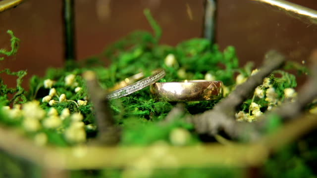 Two wedding rings in glass box with moss, close-up video