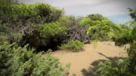Typical Mediterranean Vegetation and Dune video