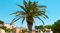 Typical Spanish house establishing shot 4k, palm tree and clear blue sky video