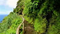 Typical trail along the coastline of the Azores video