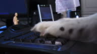 Typing Dog video