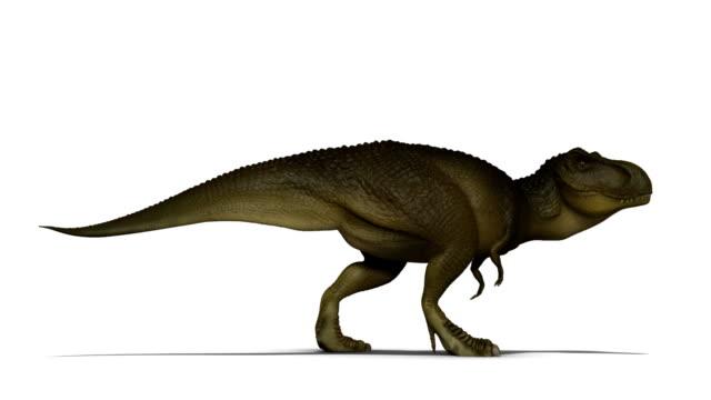 Tyrannosaurus Rex video