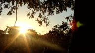 Under An Old Shady Oak Tree During A Summer Sunset video