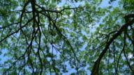 LA WS PR under branch tree and blue sky video