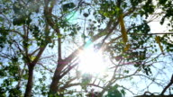 Under Ficus religiosa tree view in Thailand temple video
