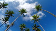 CLOSE UP SLOW MOTION: Under the tall palm trees swaying in wind on beautiful tropical island video
