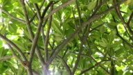 under the tropical tree in the public park and sunlight shining. video