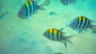 under water view : Sea fish video