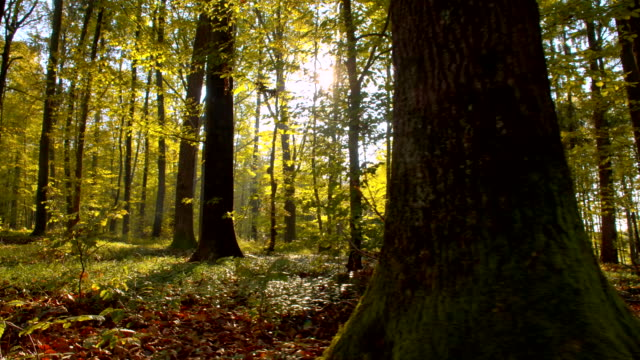 LA Underbush In The Autumn Forest video