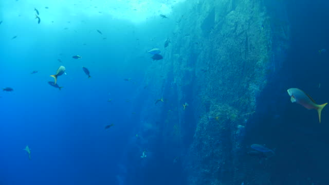 Undersea reef with school of fish video