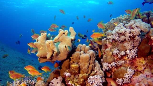 Underwater Beautiful Scene video