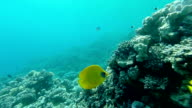 Underwater coral reef  landscape with colourful fish video