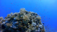 Underwater Diving on sea life coral reef / Red Sea video