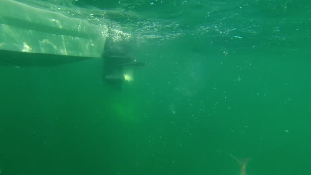 Underwater fish on hook. (New Zealand Snapper.) Recreational sea fishing. video