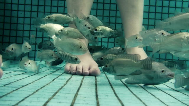 Underwater Fish Spa Pedicure Closeup video