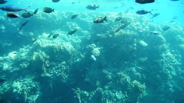 Underwater footage of sea life. Red Sea, Egypt video