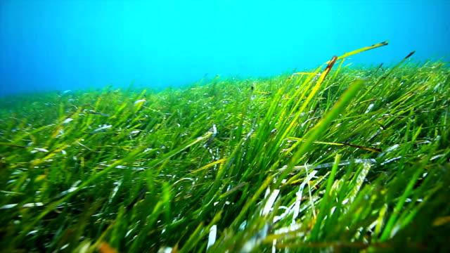Underwater grass video
