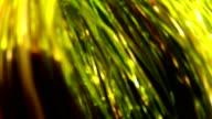 Underwater grass. video