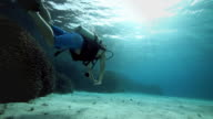 Underwater holiday, Scuba Diving in the Pacific Ocean video