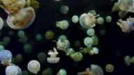 Underwater Jellyfish, Dark Ocean, Small Animals video